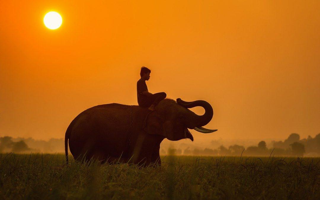 Szerencsehozó elefánt szimbólum jelentése és elhelyezése