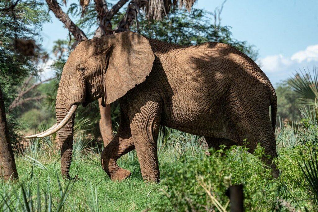 Szerencsehozó elefánt jelentése